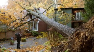 A videographer shoots a house in Toronto on Tuesday, Oct. 30, 2012, after it was crushed by a tree felled in superstorm Sandy. (The Canadian Press/Frank Gunn)