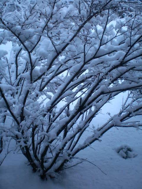 snow-storm-7.jpg