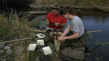 Conservation workers check the Tay River for insects which are sensitive to pollution.