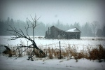 Snow falls on an old machine shed along Vance's Side Road in West Carleton on Thursday,  Jan. 29, 2015. (Brian Eastop/CTV Viewer)
