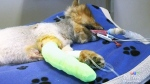 CTV Northern Ontario: Dog Attack