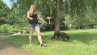 CTV Ottawa: Ottawa woman reunited with dog