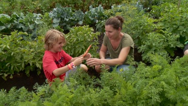 Orl Ans Community Garden Donates Fresh Food To The Ottawa Mission Ctv Ottawa News
