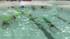 CTV Ottawa: Mermaid school