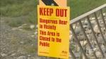 CTV Calgary: Bear attack