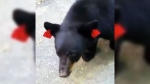 Hiker encounters two black bears in Connecticut