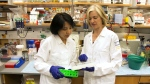 In this photo provided by UC Berkeley Public Affairs Jennifer Doudna, right, and her lab manager, Kai Hong, work in her laboratory in Berkeley, Calif. on June 20, 2014. (Cailey Cotner / UC Berkeley)