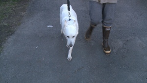 'Moss' the dog saves lives in Spadina fire.