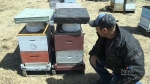 More than five million bees were stolen from an ap