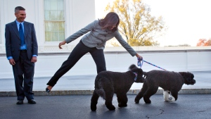 In this Nov. 27, 2015, file photo, first lady Michelle Obama is pulled away by her dogs Bo and Sunny, after welcoming the Official White House Christmas Tree to the White House in Washington. (AP / Pablo Martinez Monsivais, File)