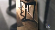 CTV Ottawa: Snake found in woman's apartment