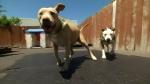 CTV National News: Do pitbull bans work?