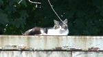 CTV Atlantic: Unwanted feral cats on Cape Breton