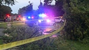 CTV Windsor: Scattered damage after storm