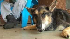 Toronto man wants to clone his dog