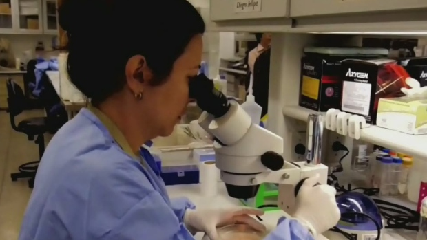 CTV Ottawa: Two reports of west nile virus