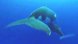 Tracking whales in Maritime waters