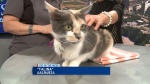 Pet of the Week: Talina the Cat