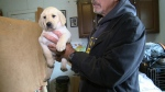 CTV Ottawa: New puppy for Alex