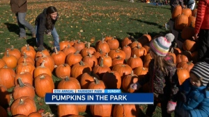 CTV Ottawa: Pumpkins in the Park