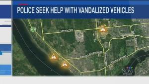 CTV Ottawa: Gatineau police seek help