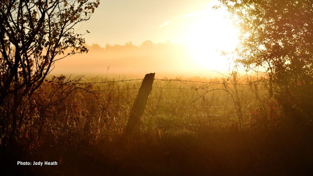Misty fall morning sunrise in Carp, Ontario. (Jody Heath/CTV Viewer)