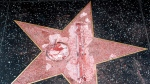 The vandalized star for Republican presidential candidate Donald Trump is seen on the Hollywood Walk of Fame, Wednesday, Oct. 26, 2016, in Los Angeles. (AP Photo/Richard Vogel)
