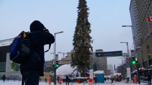 CTV National News: Tale of a towering tree