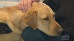 CTV Windsor: Canine controversy