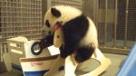 CTV News Channel: Playful pandas capture hearts
