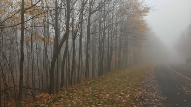 Foggy morning in Gatineau Park