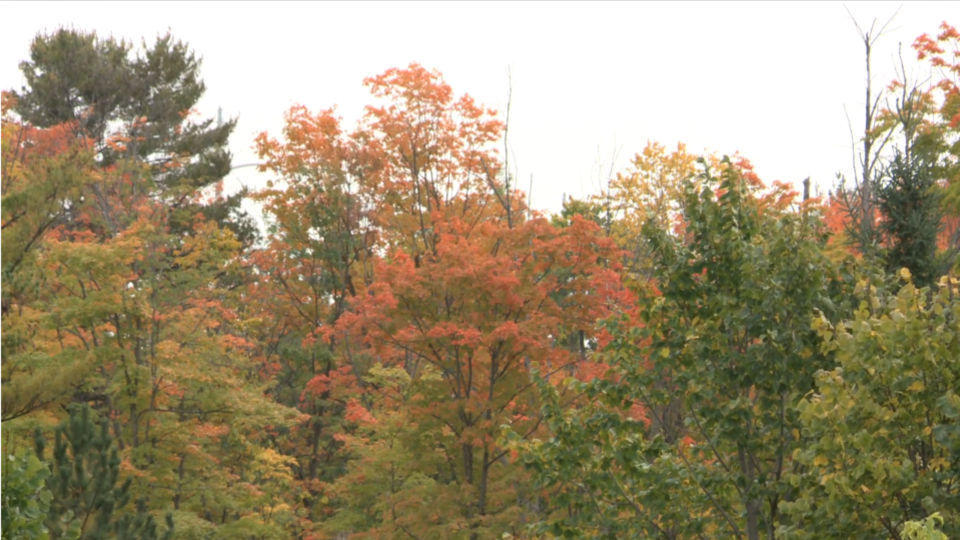 Fall colours Gatineau Park